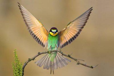 online feldenkrais classes spread your wings with sheri cohen